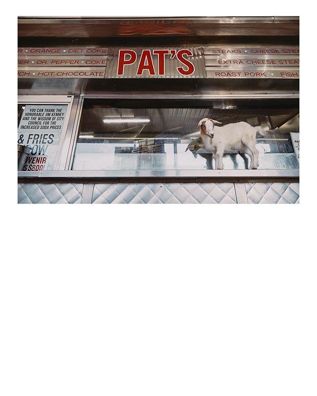 Violet, Princess of Goats, at Pat's King of Steaks! @phillygoatproject #patskingofsteaks #wizwit