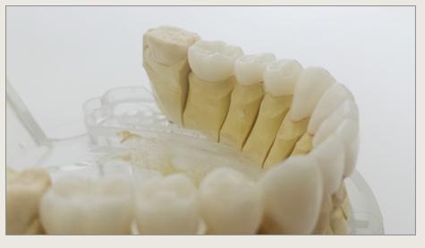 natural dentist tampa.png