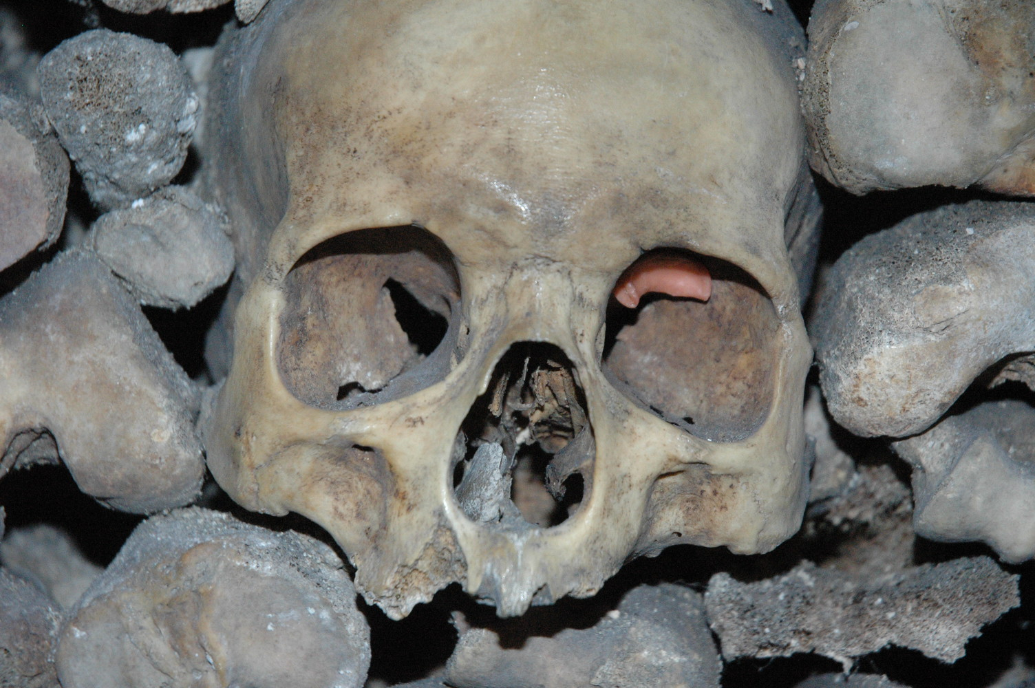 This is the skull that is about to be referenced below.
