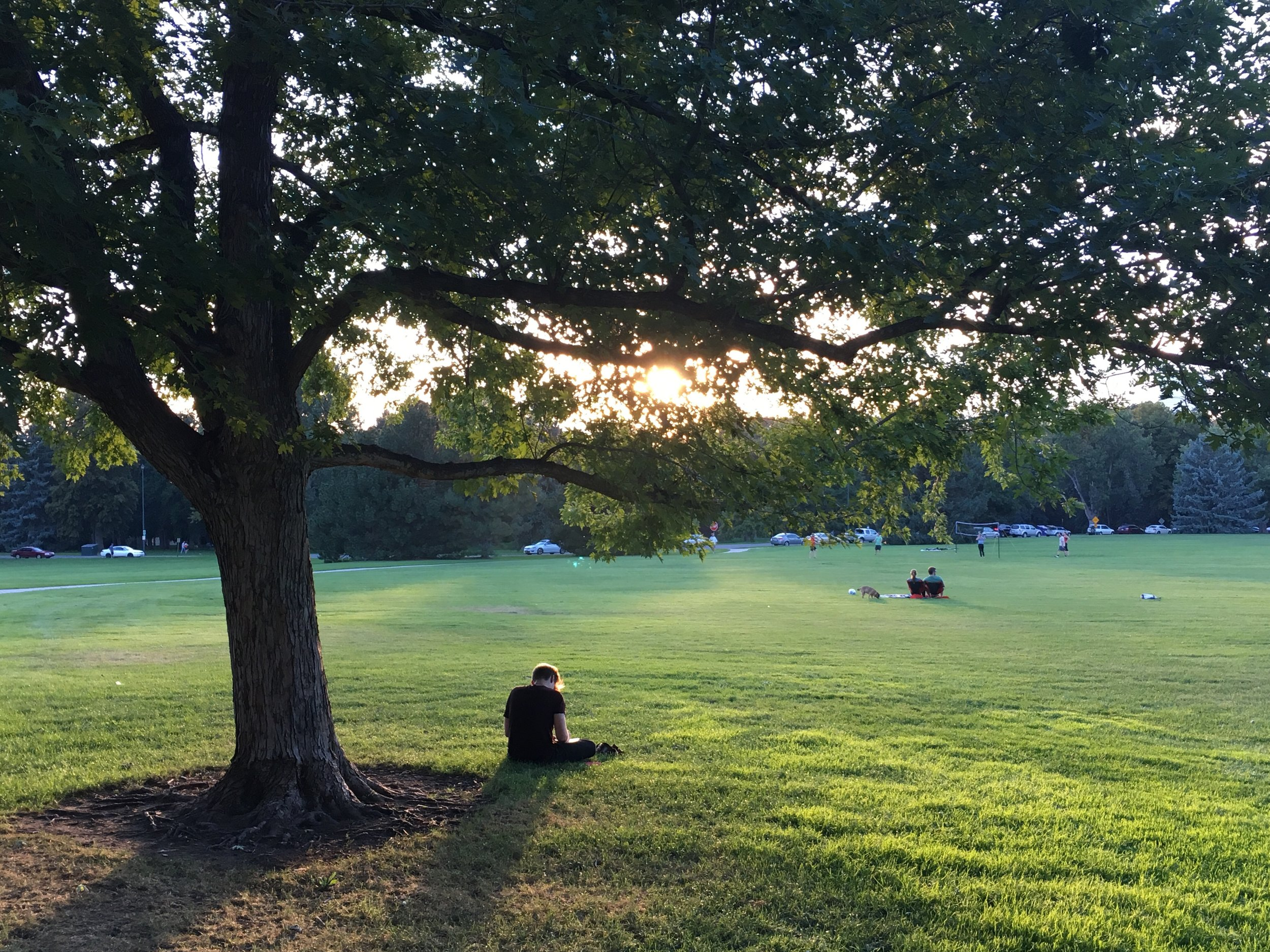 There's nothing like pondering life under a shady tree at sunset. Seriously, try it some time.