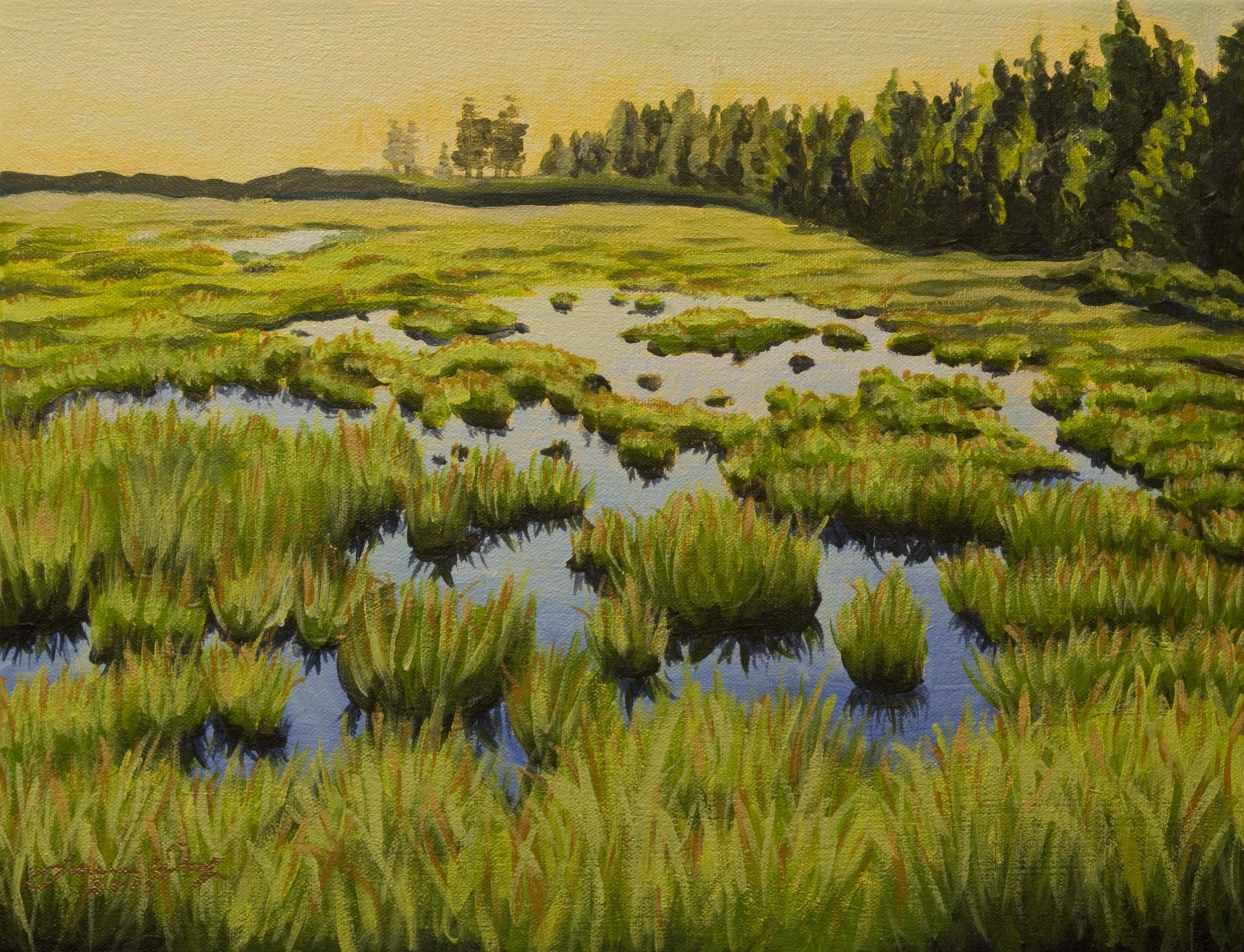 Maine Marsh 2