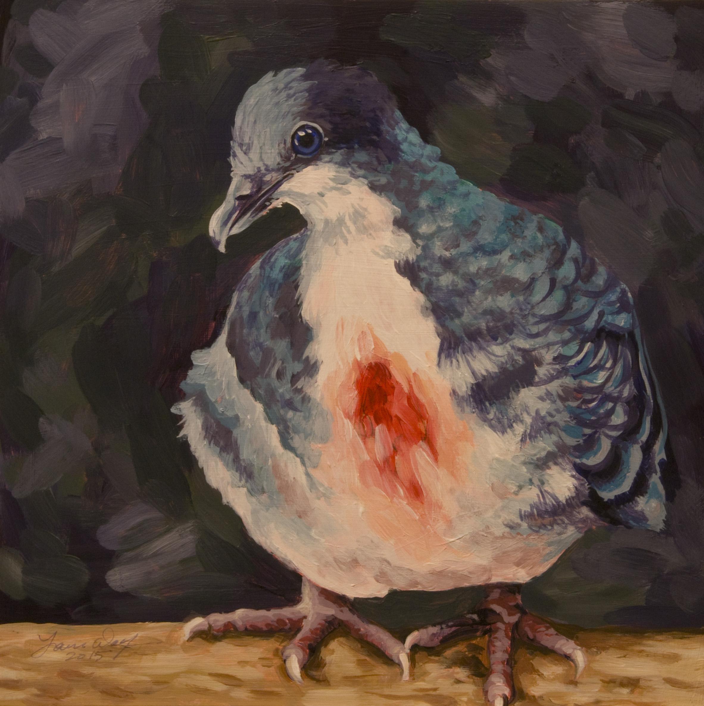 Bleeding Heart Dove