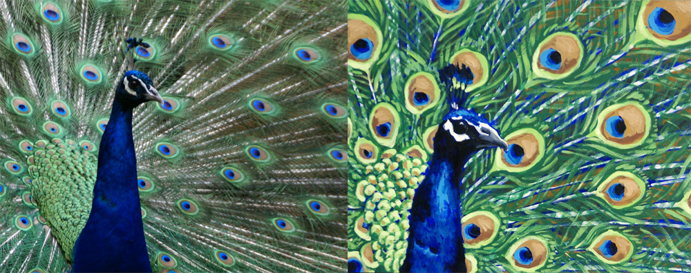 Peacock, for Emily McDonald