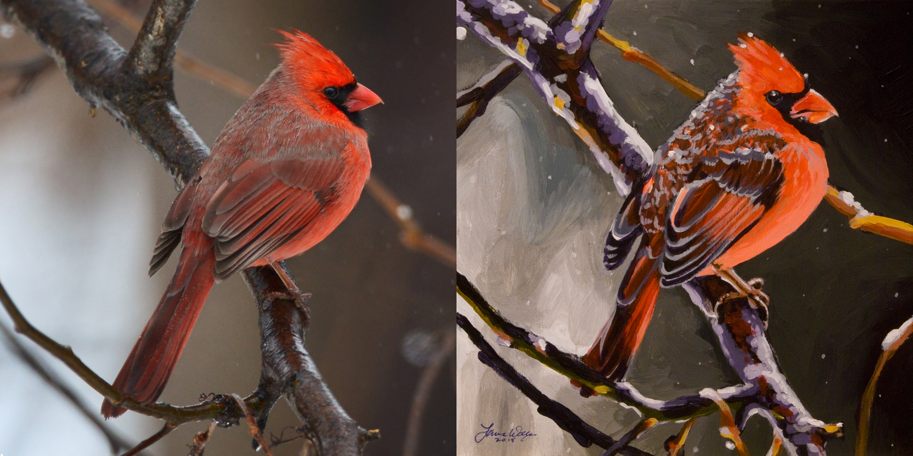 Northern Cardinal Male, for Peter Dinsmore