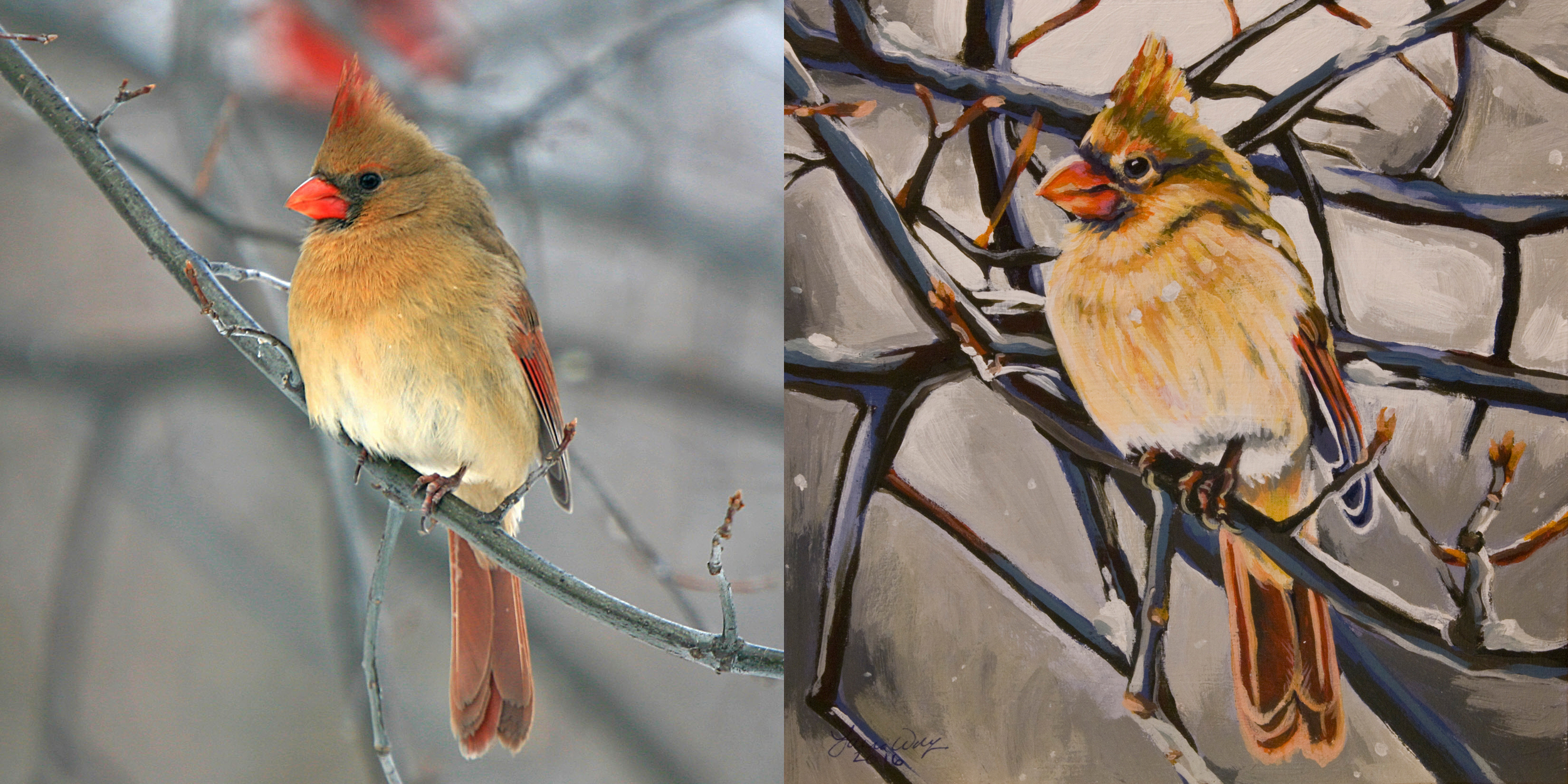 Northern Cardinal Female, for Sally Dinsmore