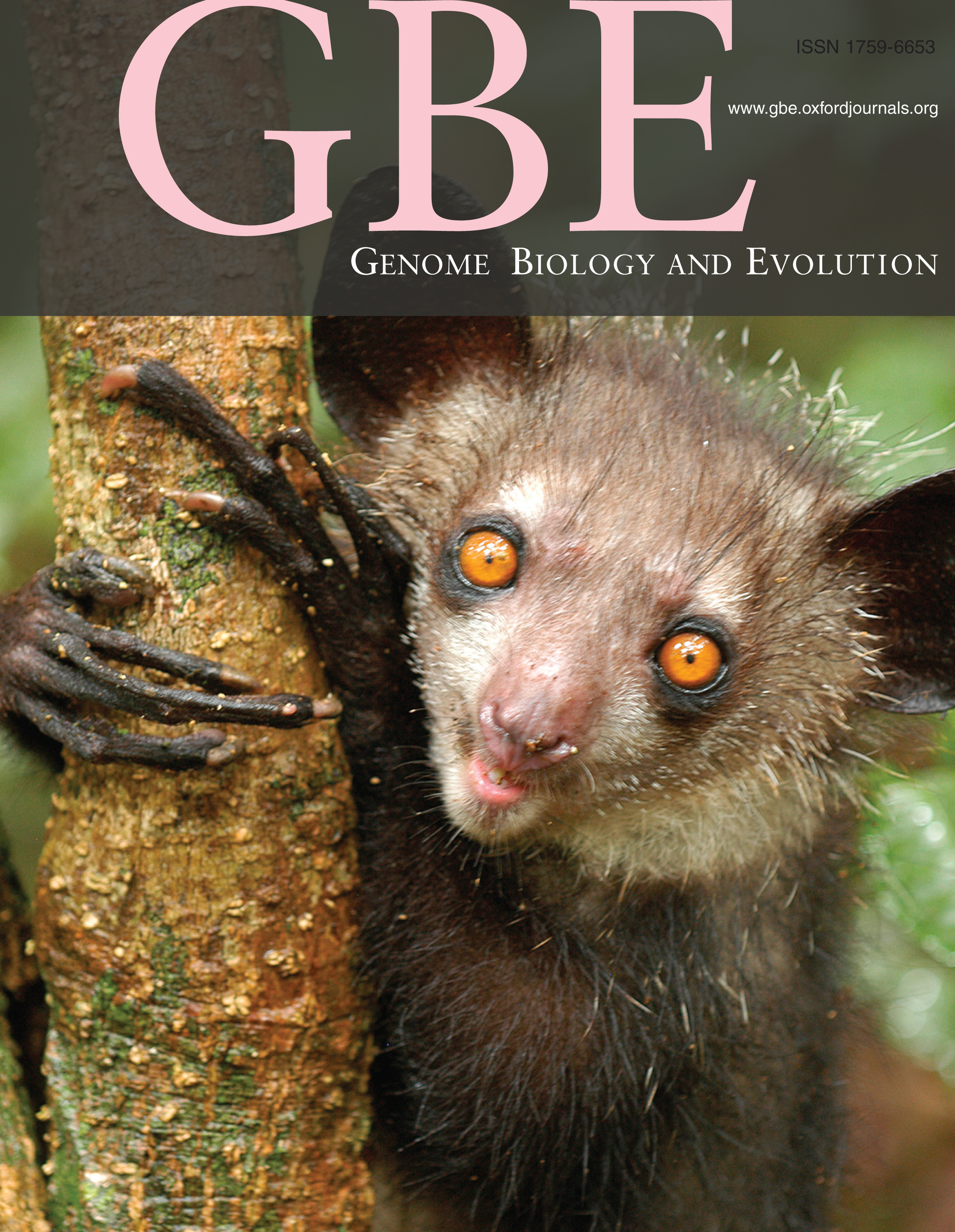 Genome Biology and Evolution  cover for  Perry et al. 2012 . Cover photo by Edward Louis.