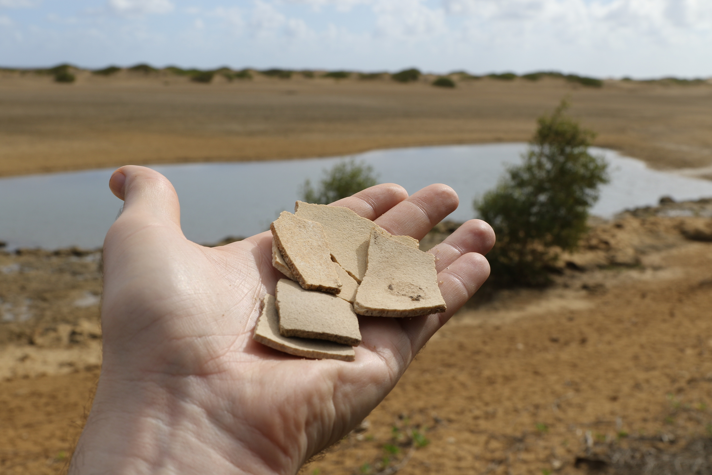 Extinct giant elephant bird ( Aepyornis  spp.) eggshell fragments from near Manombo, north of Toliara, Madagascar.