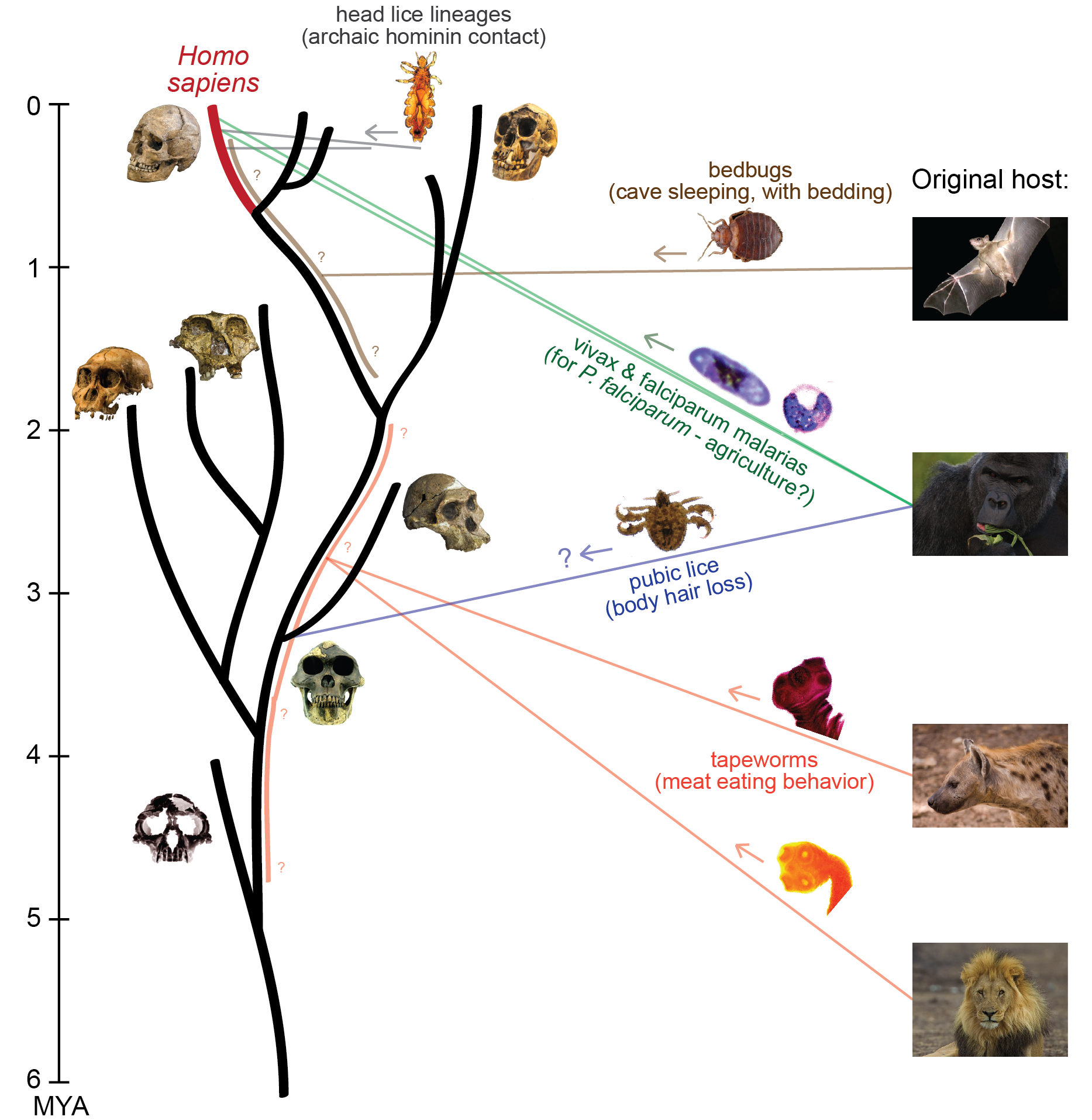 Figure 1 from  Perry 2014