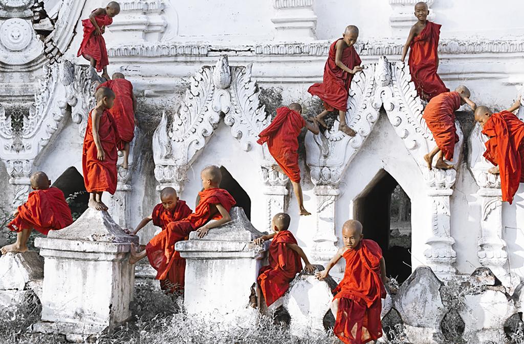 Cardinals Climbing ( Photo Credit: Felice Willat)