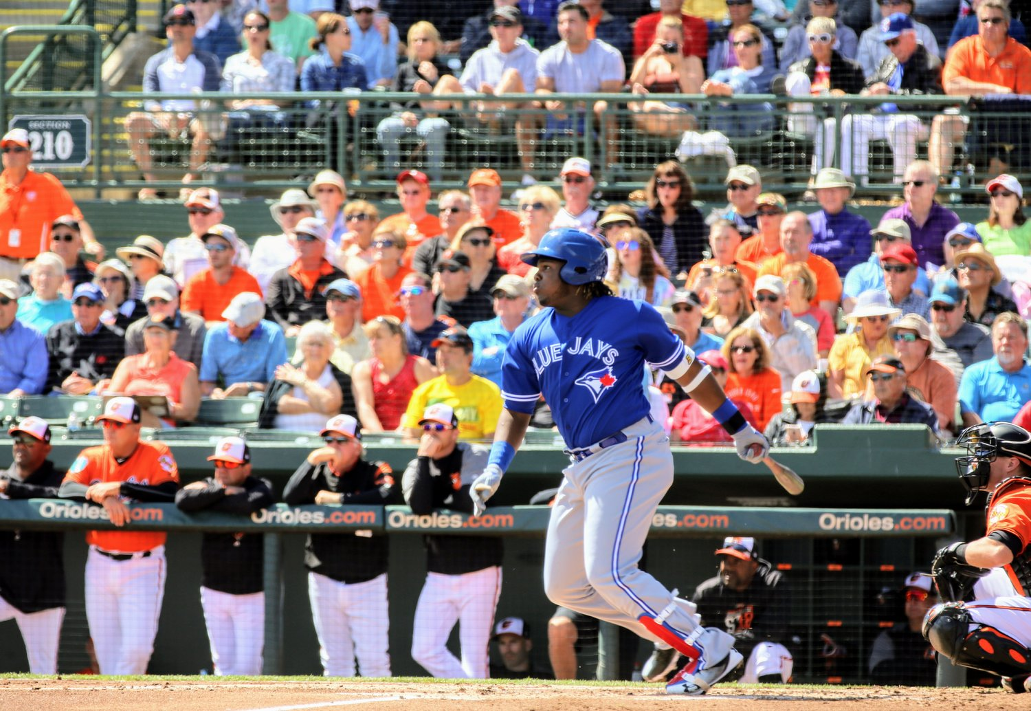 Toronto Blue Jays young slugger Vladimir Guerrero Jr. (Montreal, Que.) has been named the American League Player of the Week. Photo: Amanda Fewer