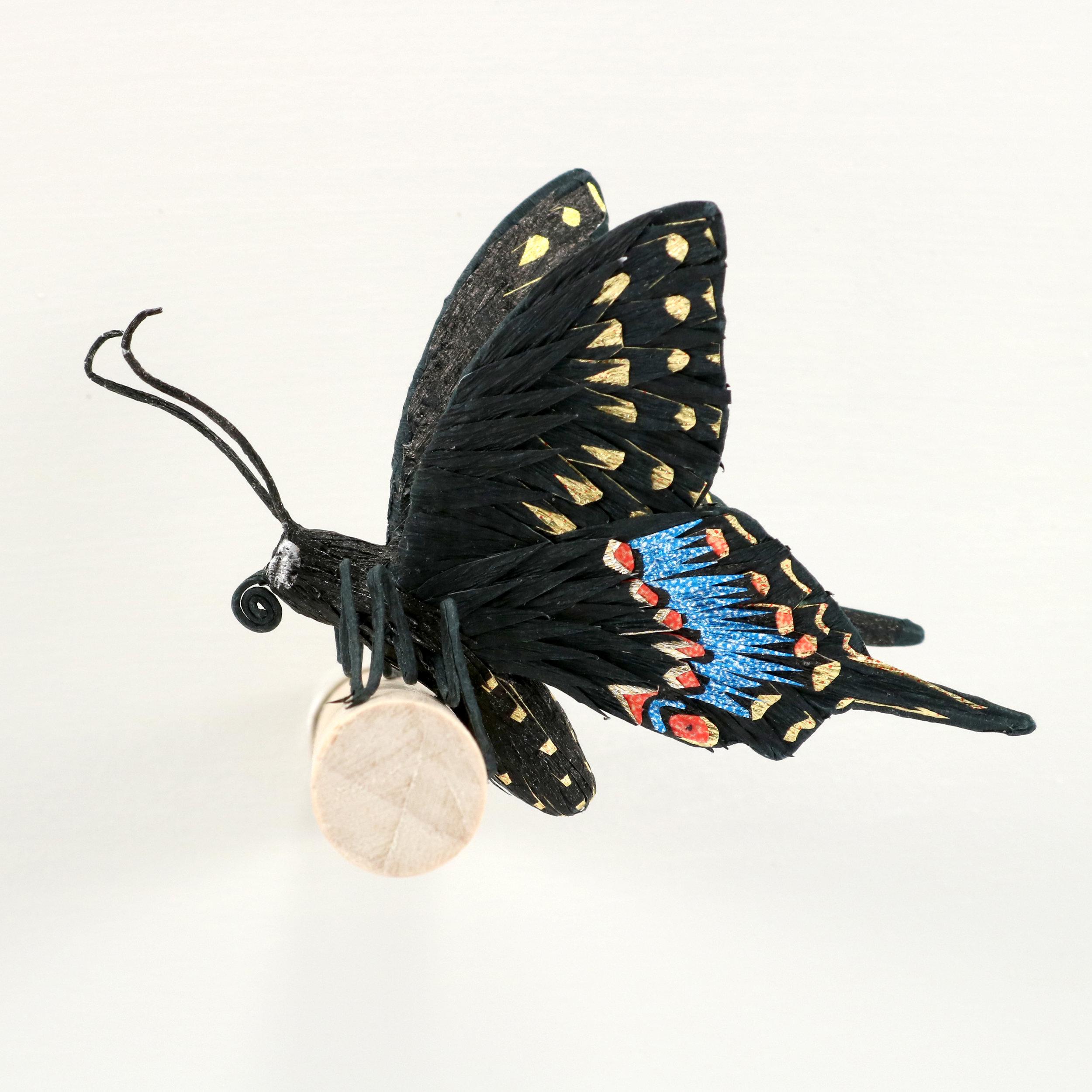 Tate - Black Swallowtail.jpg
