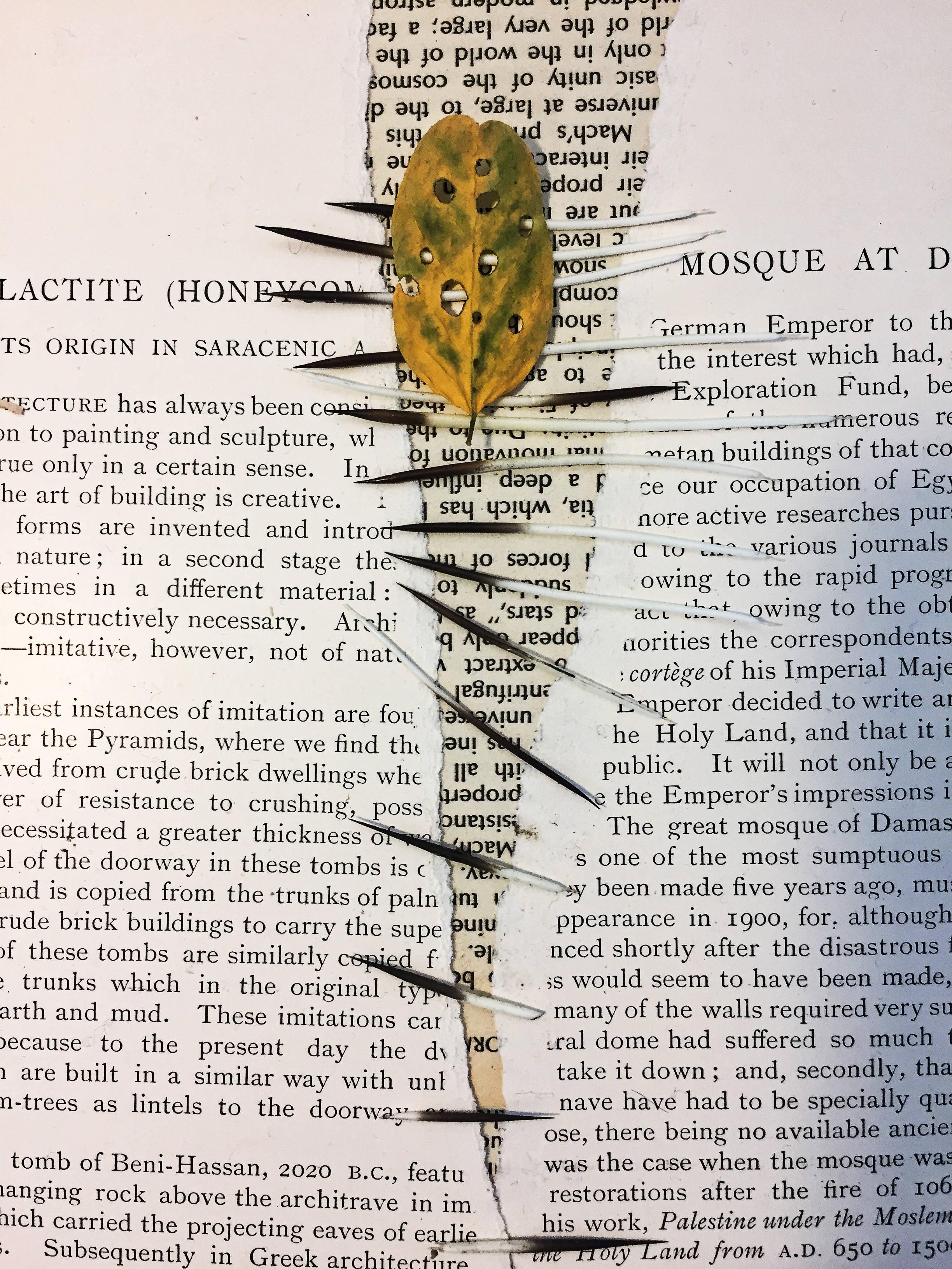leaf&quill.jpg