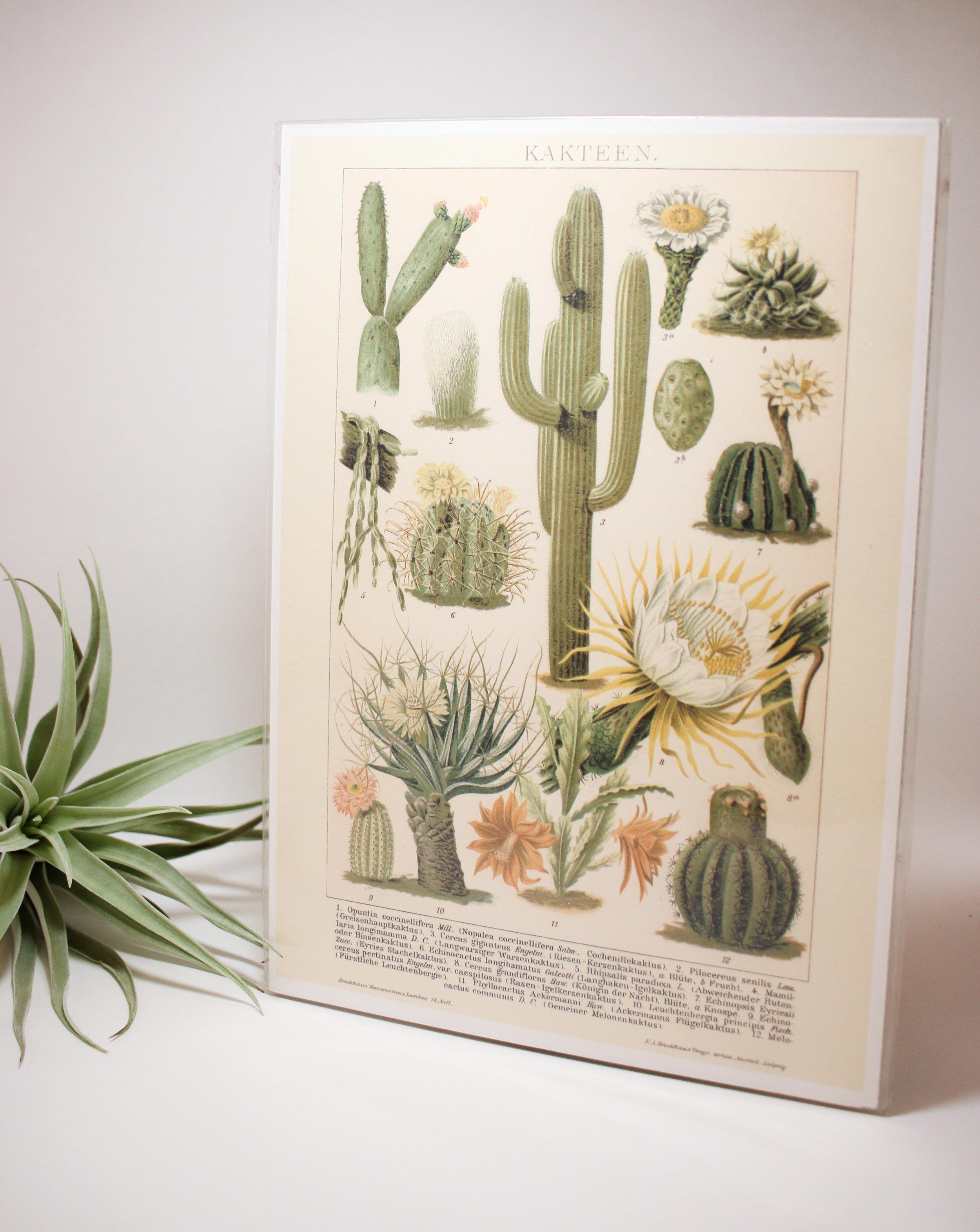 Kakteen Plant print
