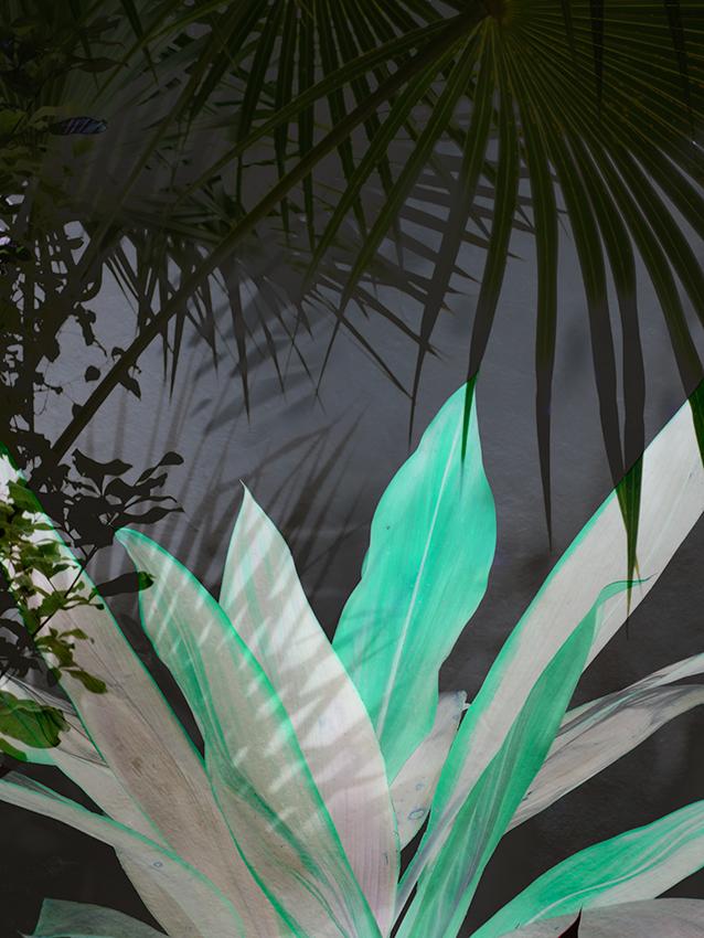 Night Palm , 2017. Photographic collage. Elizabeth Chiles.
