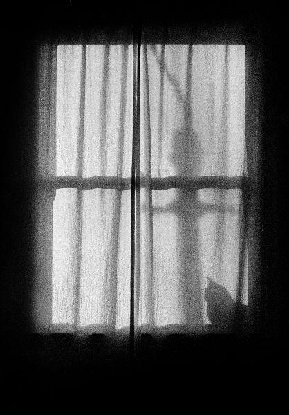 cat_in_window_1.jpg
