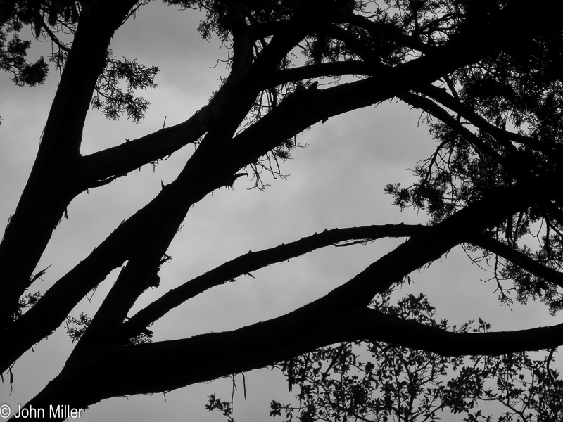 Tree Abstract 1 - John Miller Photography
