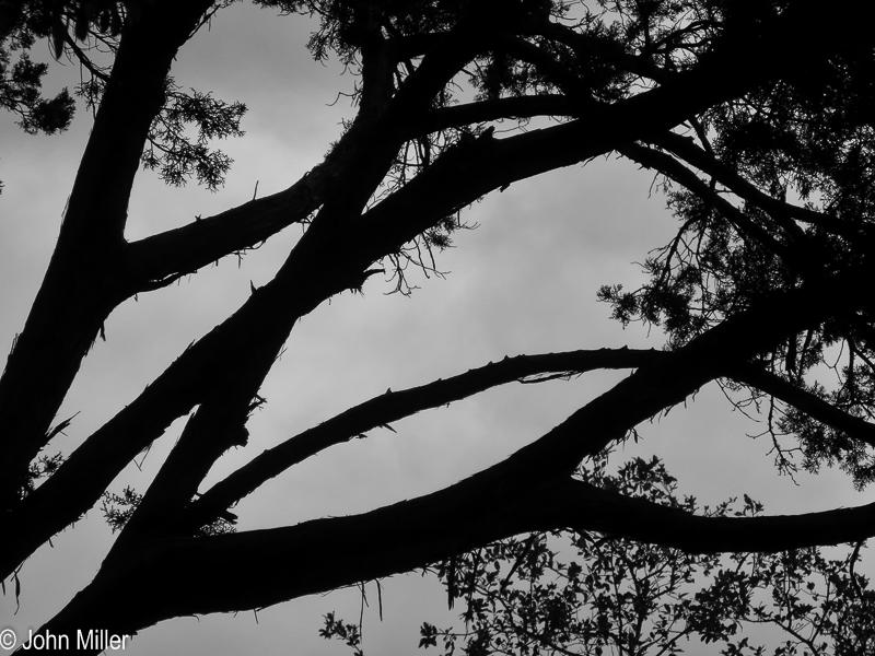 Tree Abstract 1 - John Miller Photography