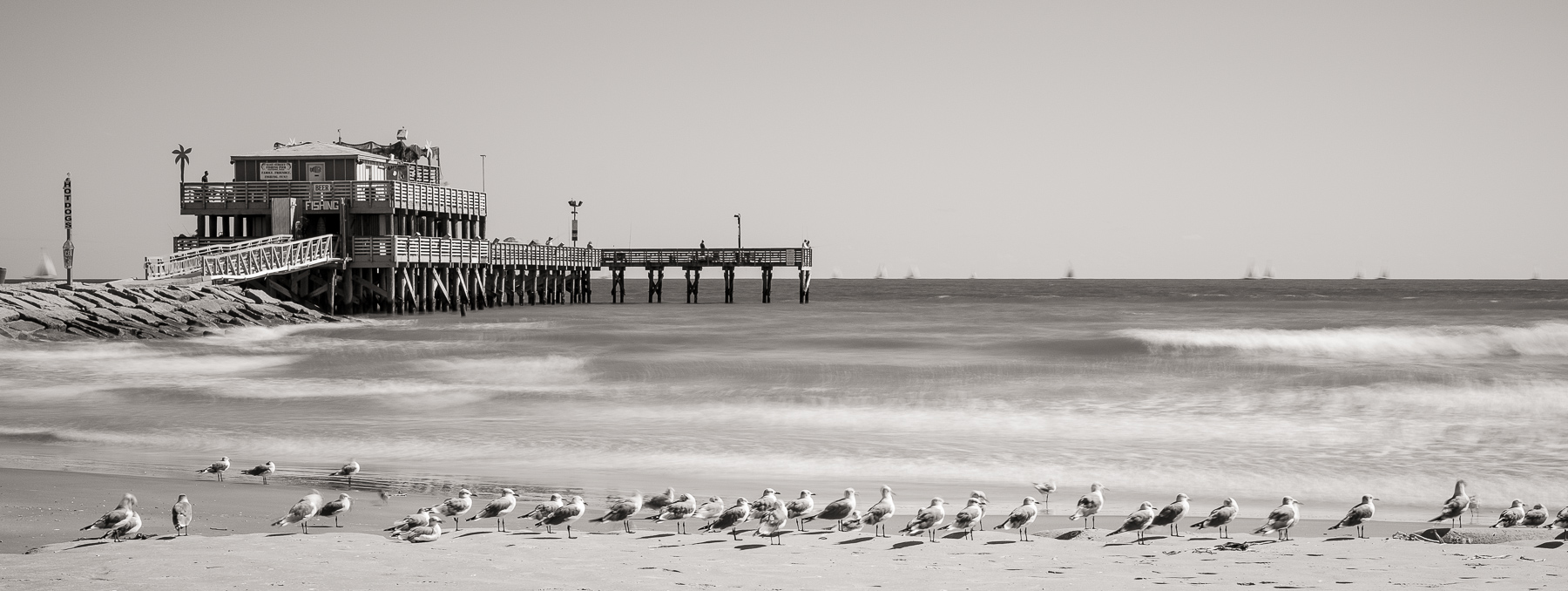61st Street Pier and Seagulls