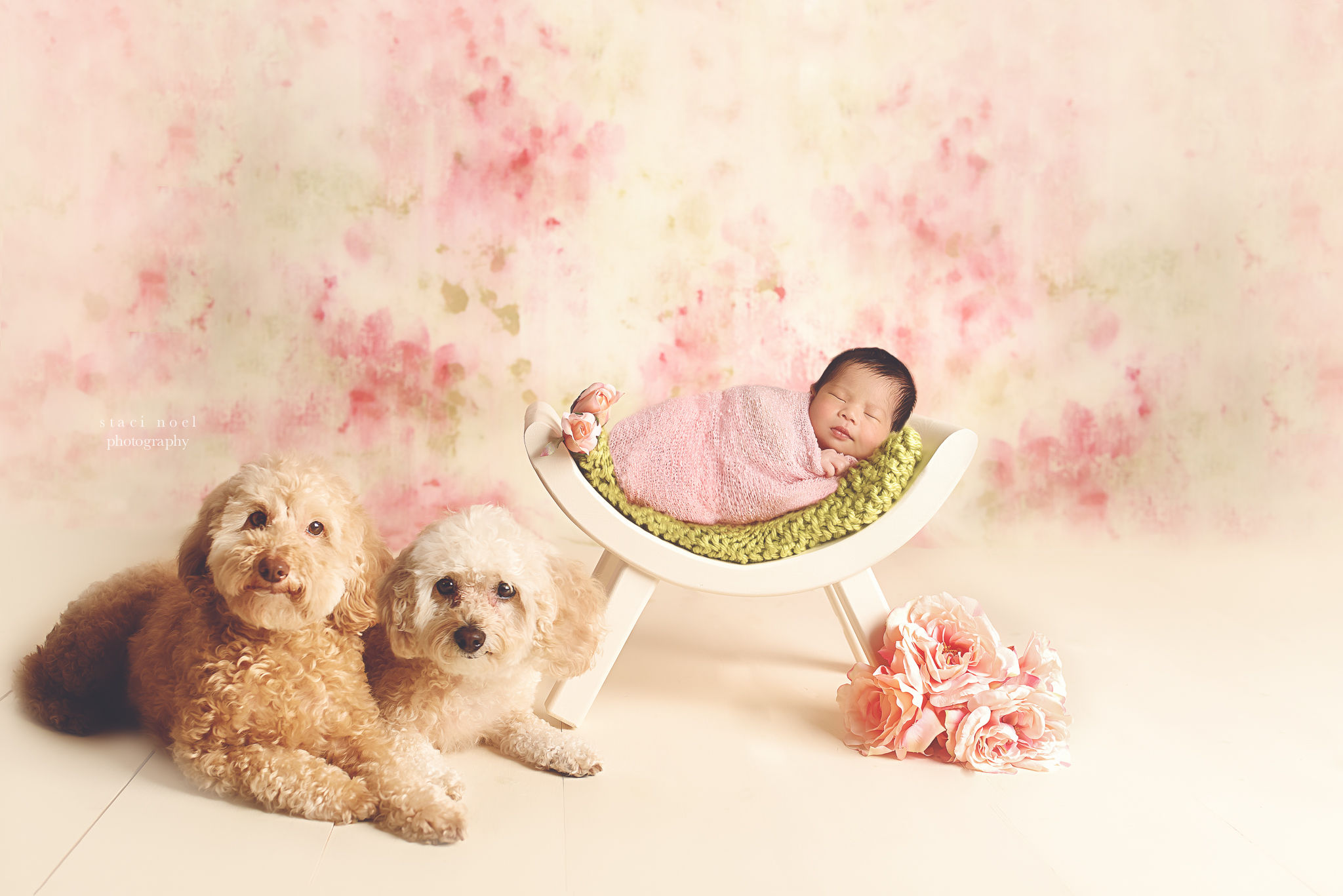 charlotte newborn photography baby girl and dogs