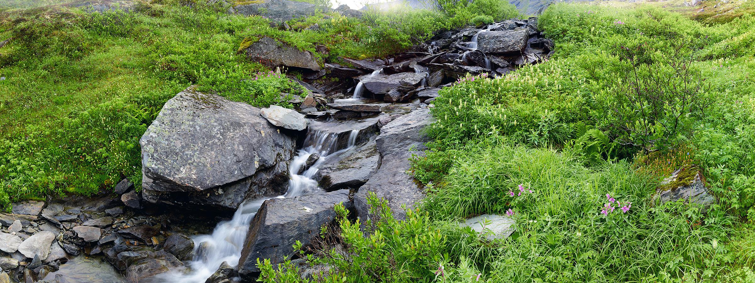 Meadow Falls & Flowers.jpg