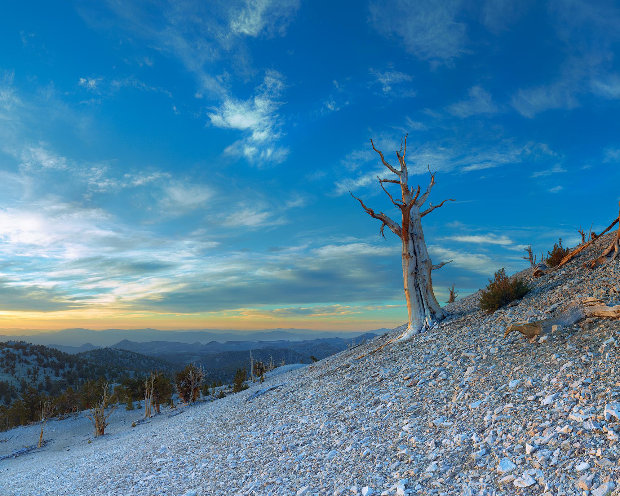 Bristle Cone Pine Sunrise.jpg