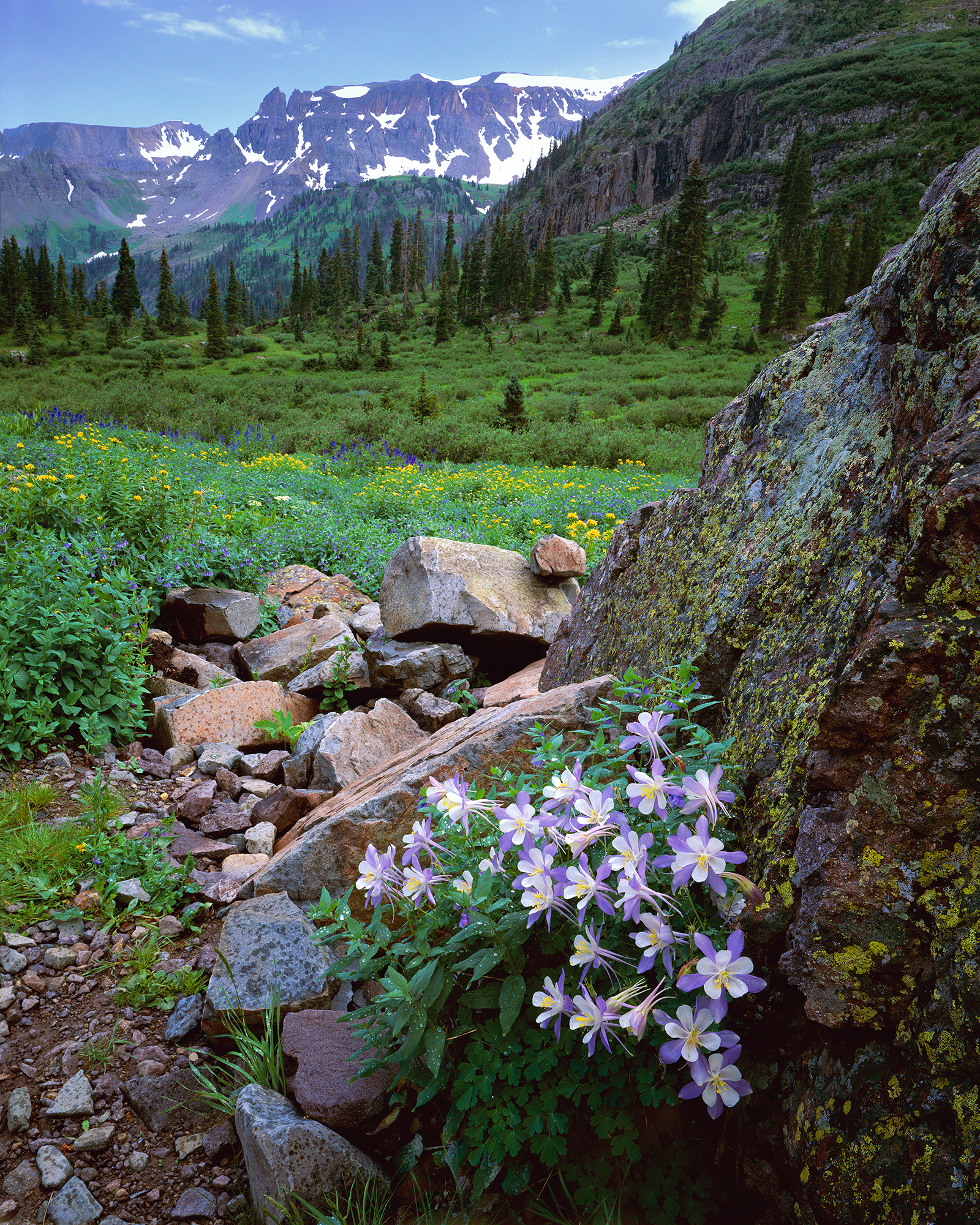Columbine on Rock.jpg