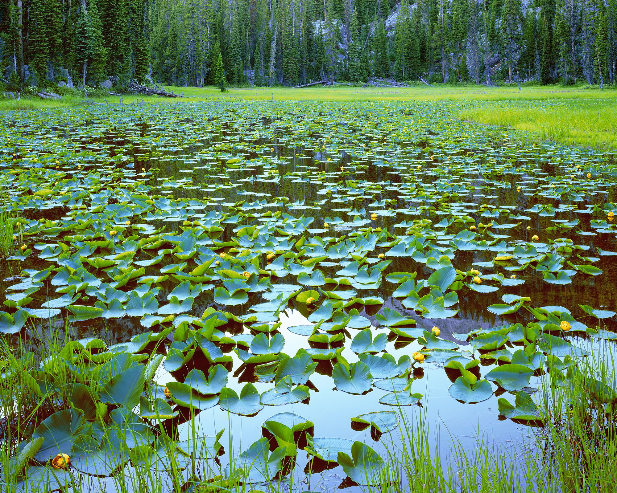 A Wilderness Oasis.jpg