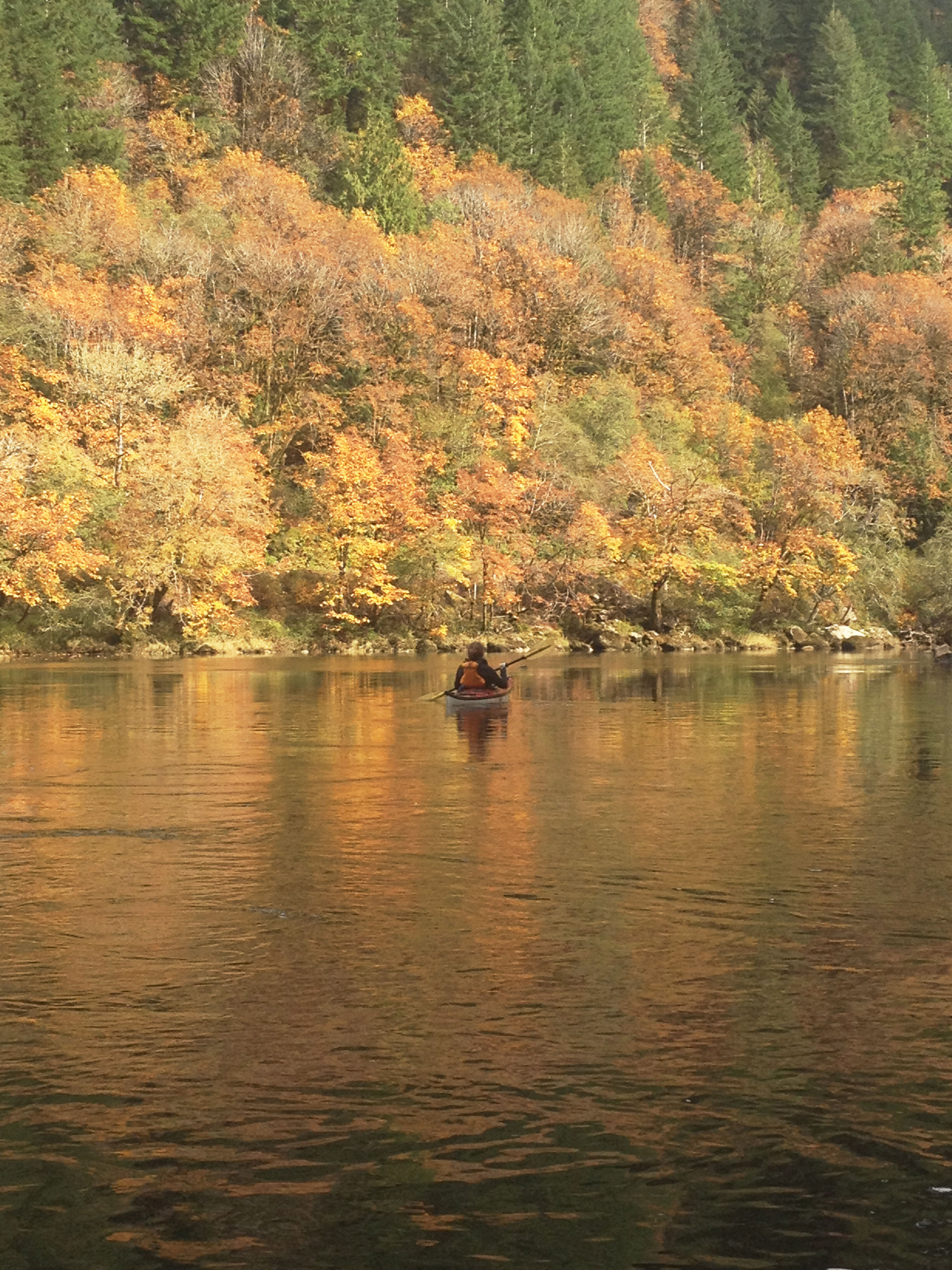 Fall colors on the river.