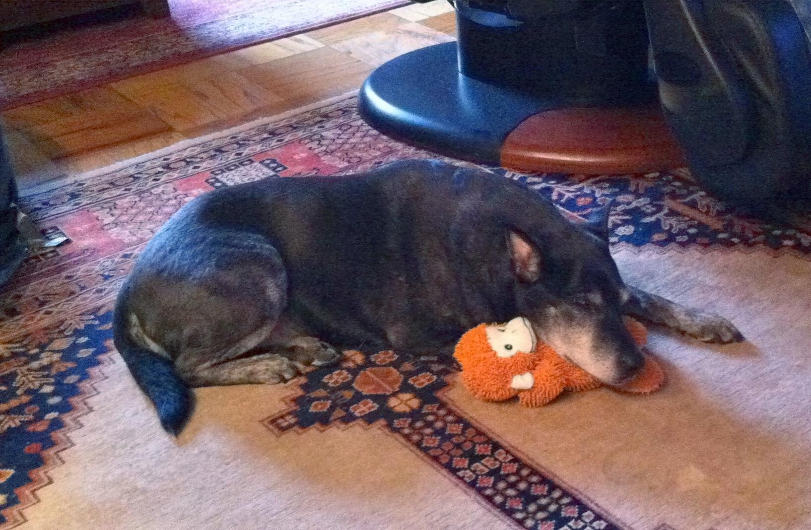 newman sleeps on monkey
