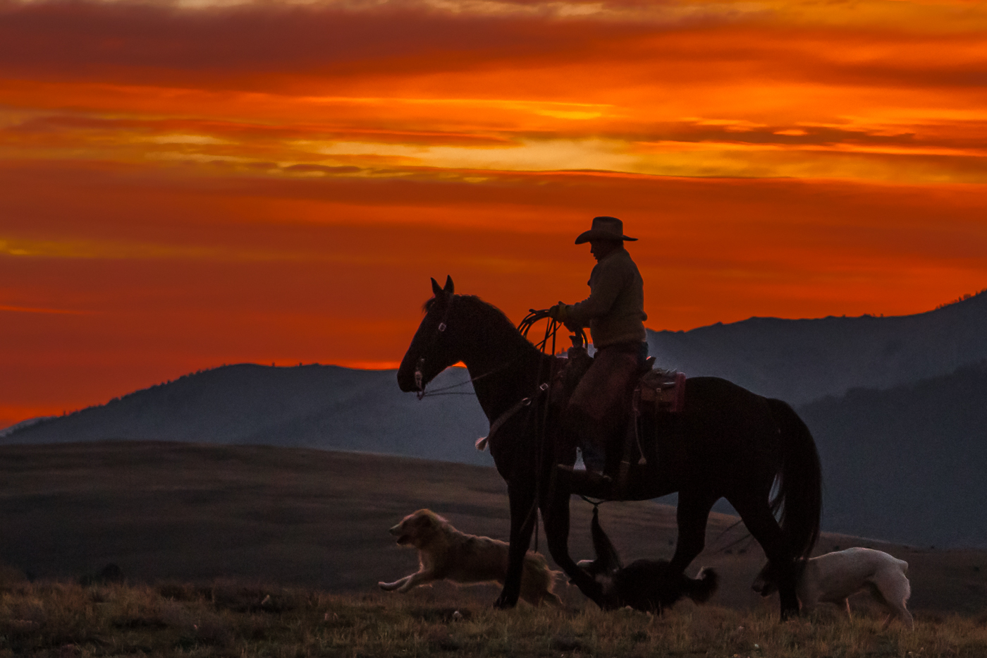 Cowboy at Sunrise with His Buddies