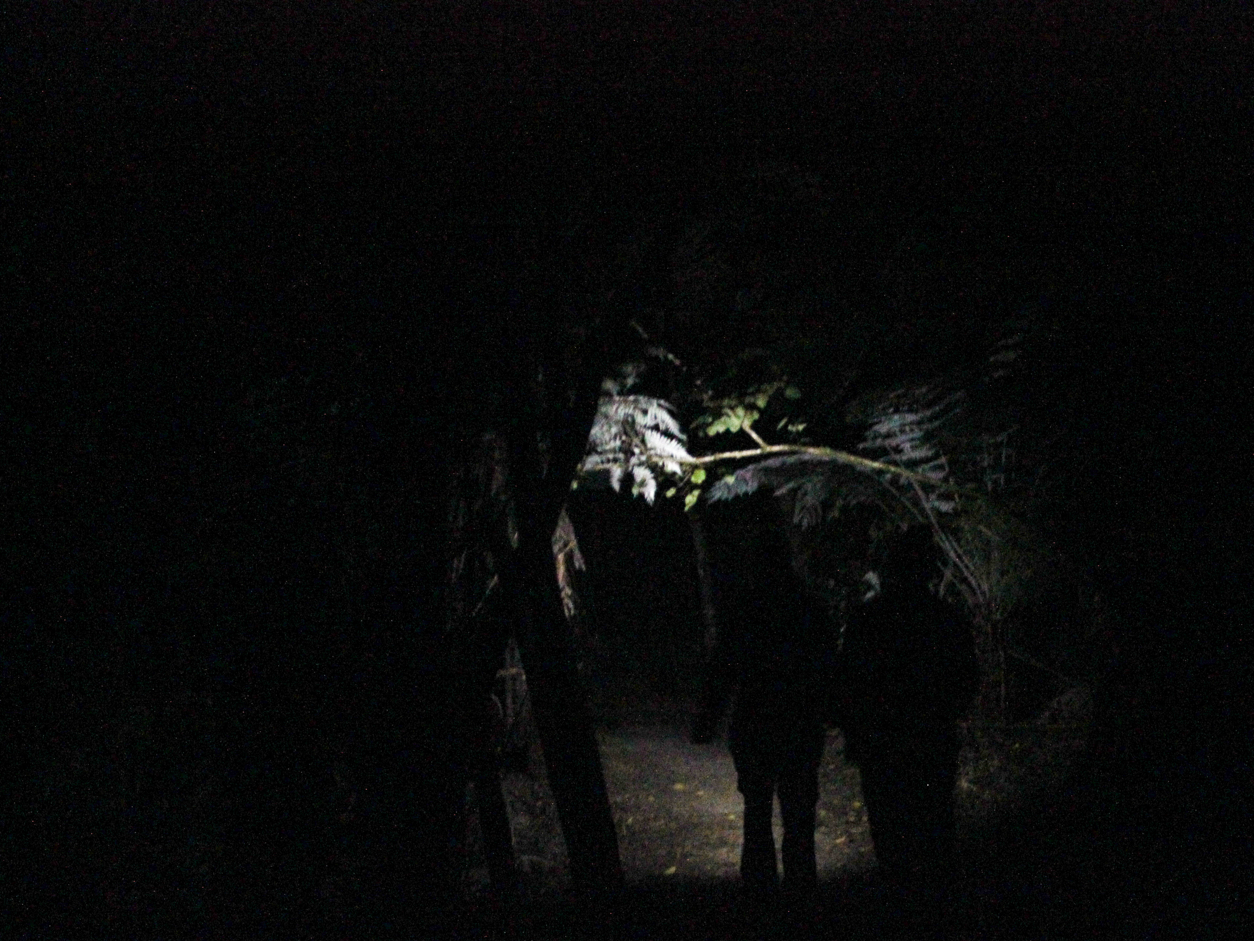 On our last night in Abel Tasman National Park, Jamie and I venture into the dark with only flashlights to guide us to search for glow worms.