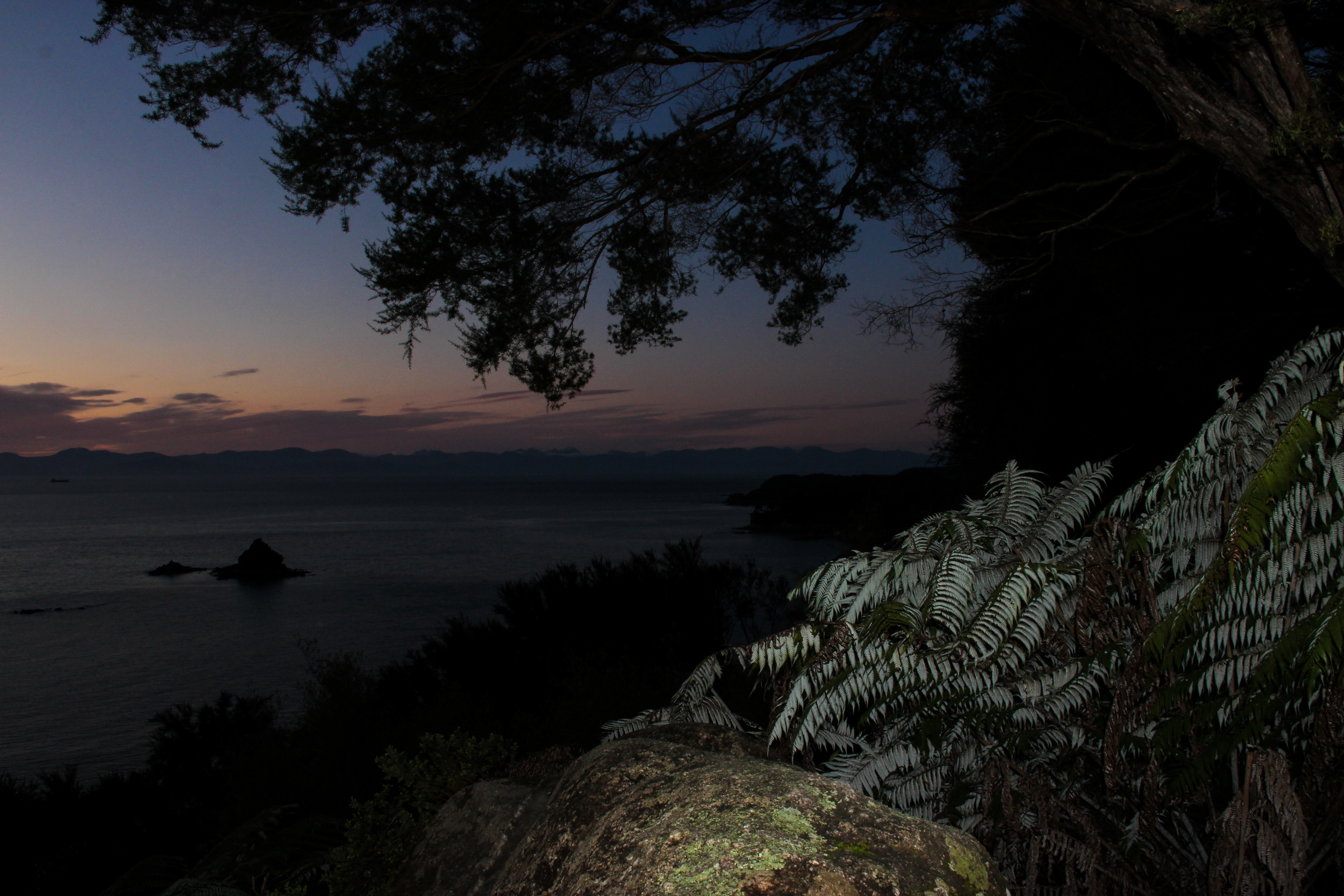 The sun rises over the Pacific Ocean's horizon, visible from an outcropping a 20 minute hike from Bark Bat Hut. I woke up early to catch the sunrise and savor the last hours before returning to civilization.