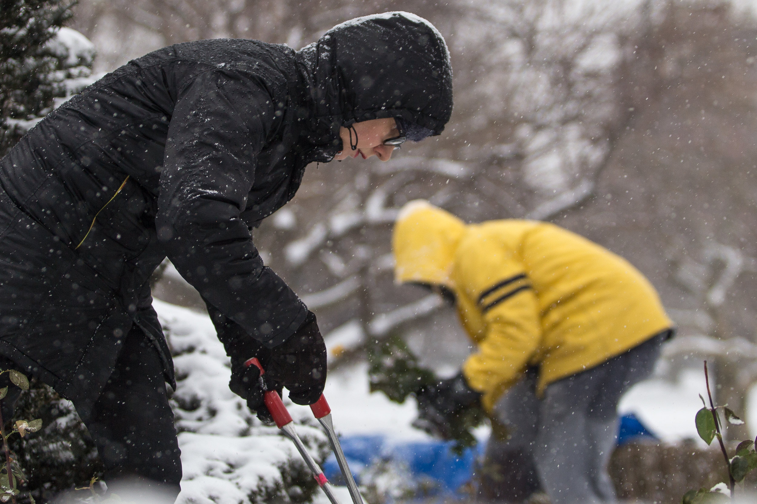 "Celeste Day (left) and Carl Foster, who volunteer for the Rose Brigade, trim rose bushes in the Boston Public Garden during a heavy snow Dec. 17, 2016. ""We're the hardcore Brigaders,"" Day said."