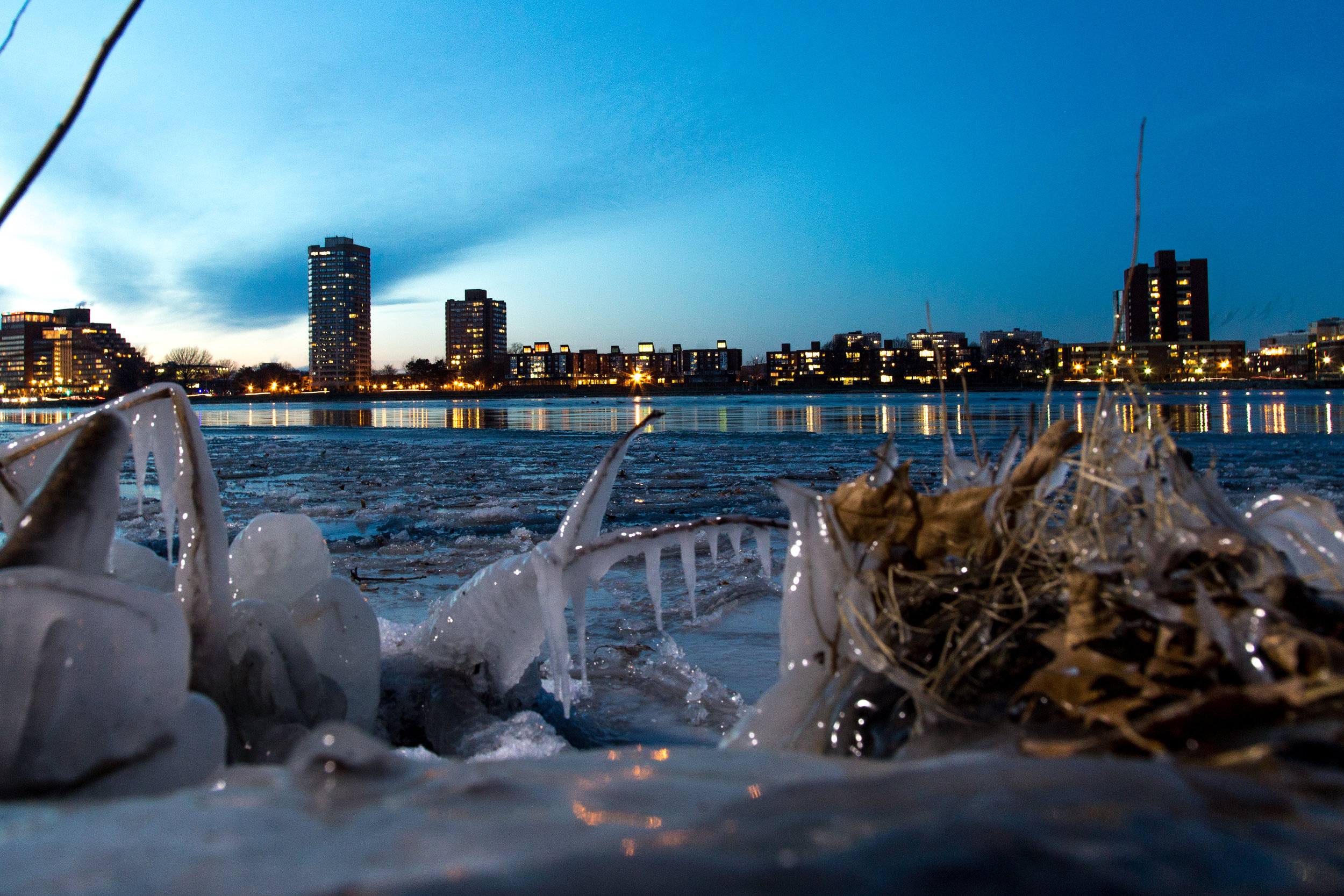 Ice coats plants next to the Charles River in Boston on Dec. 16, 2016.