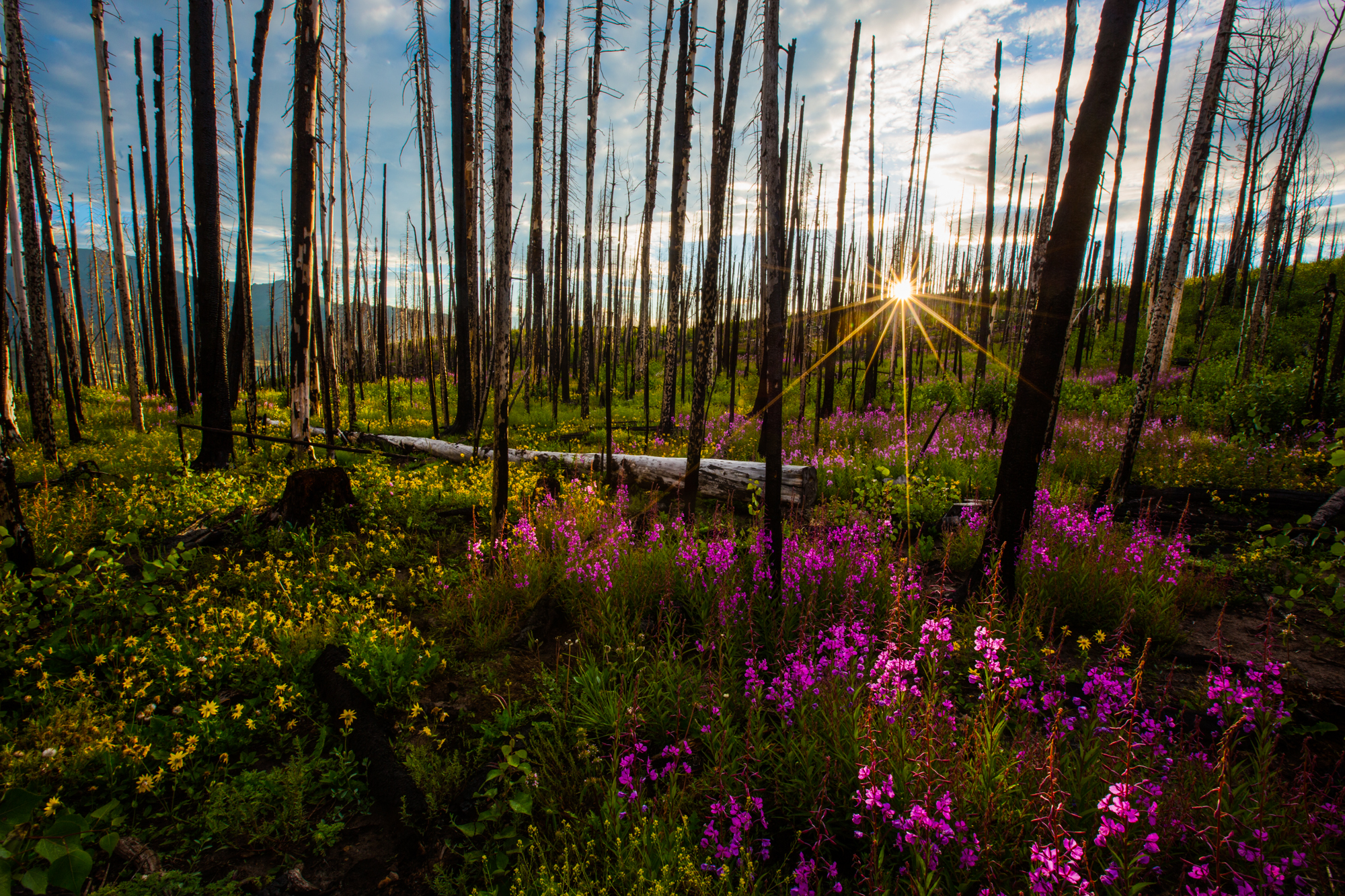 rio-grande-national-forest-fire-papoose-fork.jpg