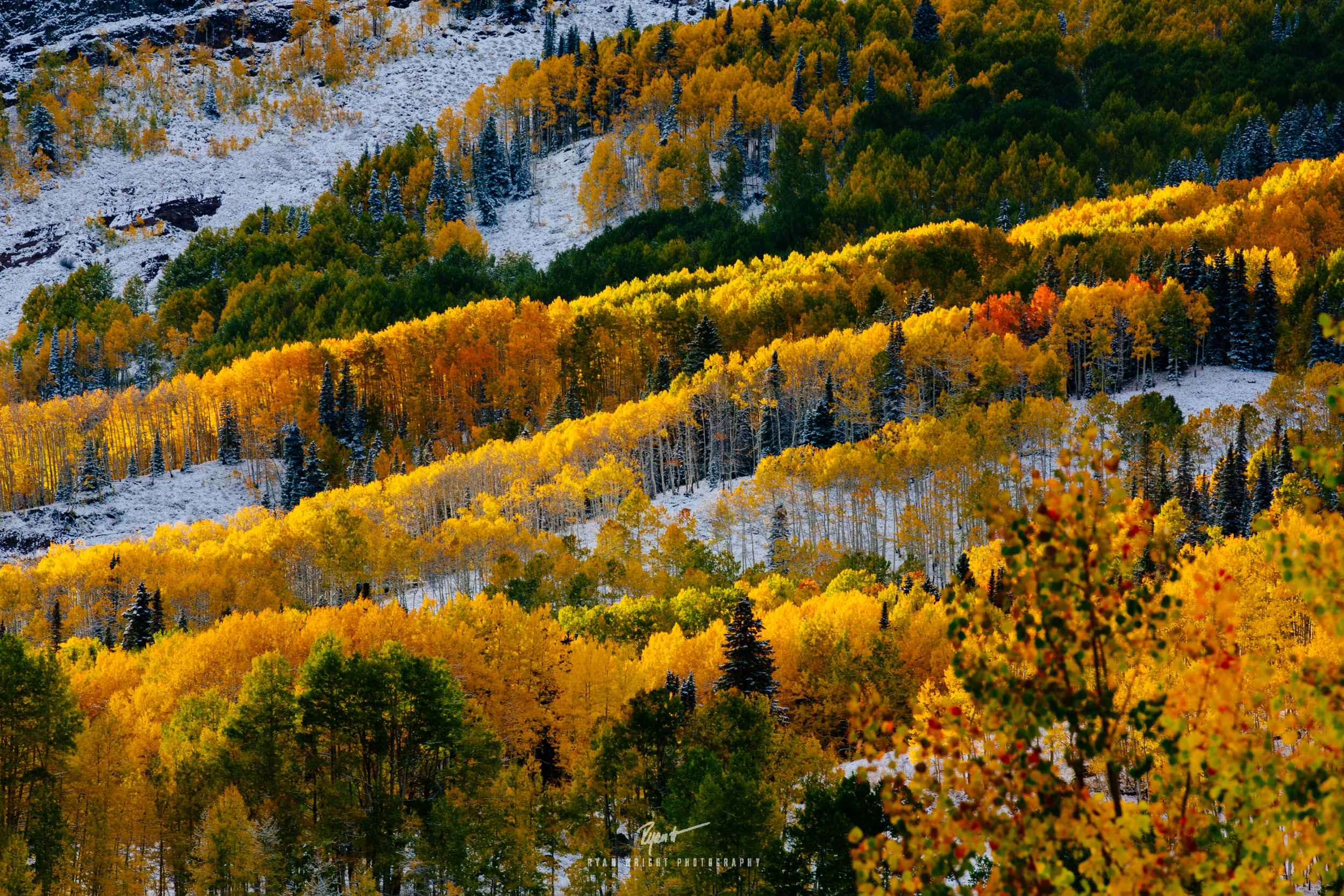 Colorful Colorado - Kebler Pass, CO -  Prints Available