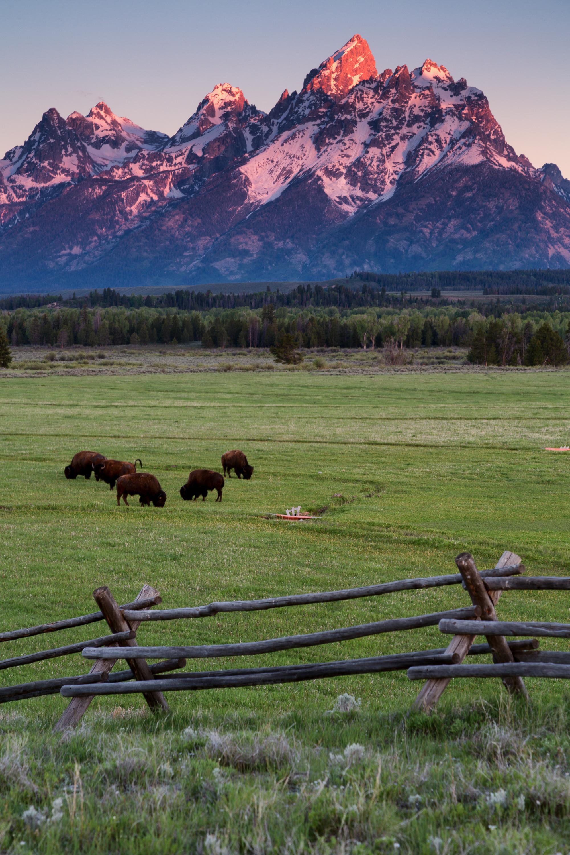 grand-teton-national-park-bison-elk-flats-jackson.jpg