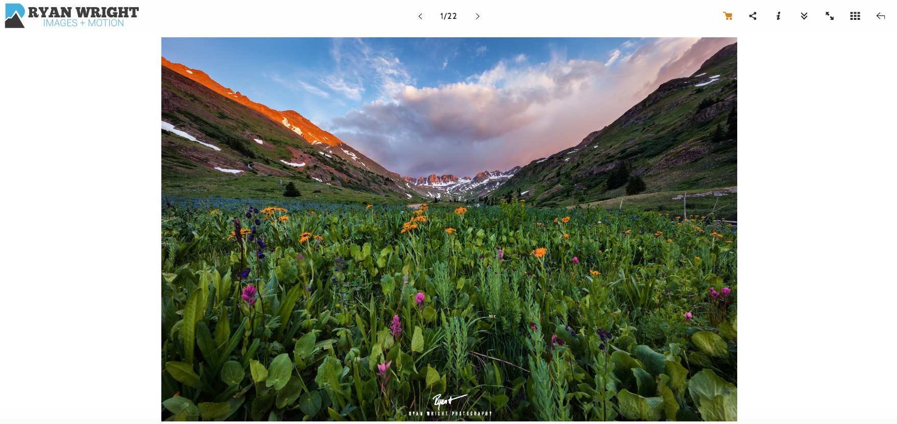photoshelter-image-display-gallery.png