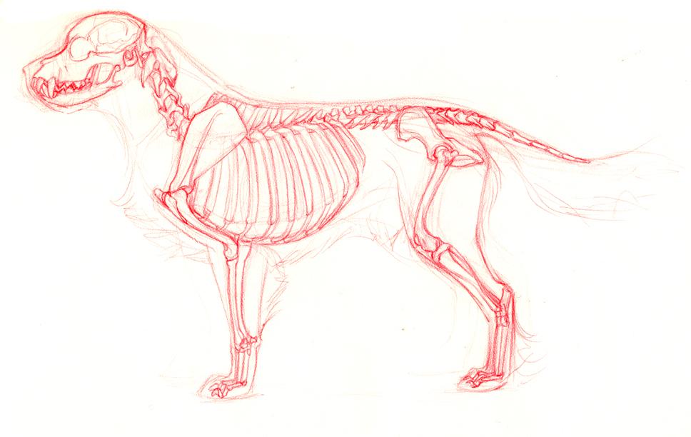 skeletonside.jpg