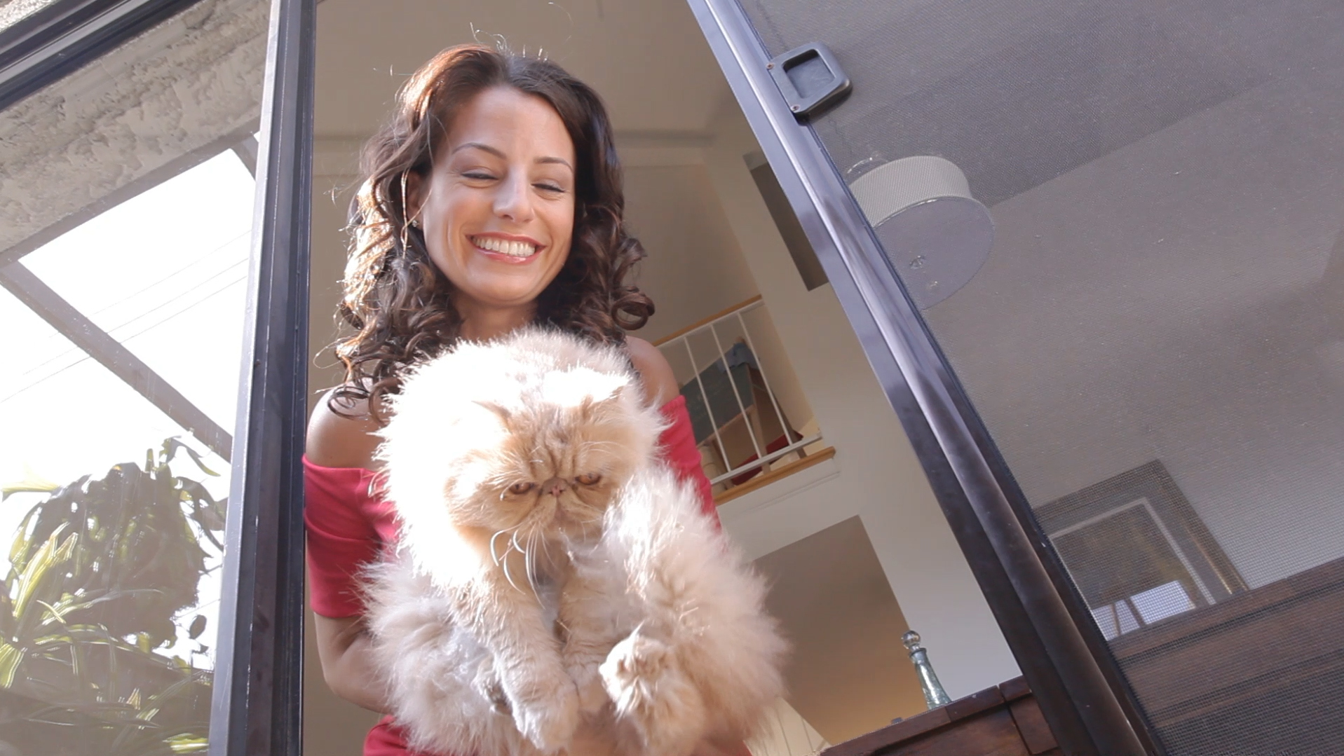 Fab Cat.jpg