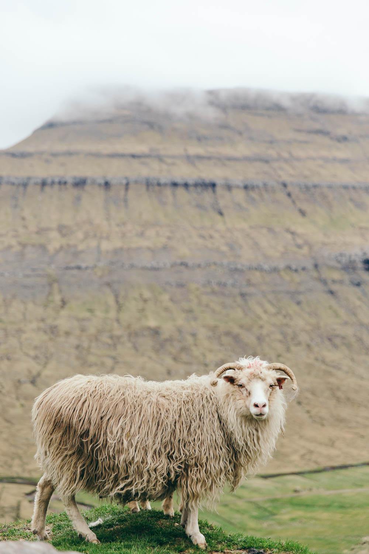 PhilippaLangley_FaroeIslands-2817.jpg