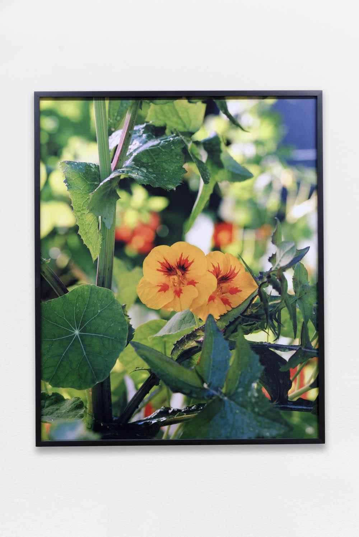 The Garden, Marin Academy, San Rafael, California,2016,archival inkjet print,77.5 x 63 cm