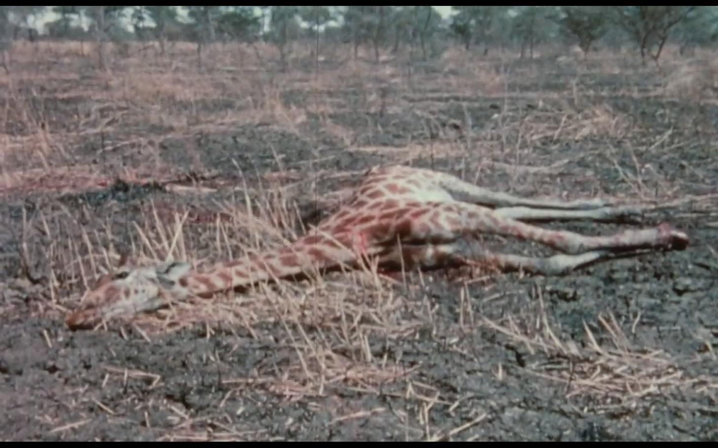 sans-soleil-1983-17.jpg