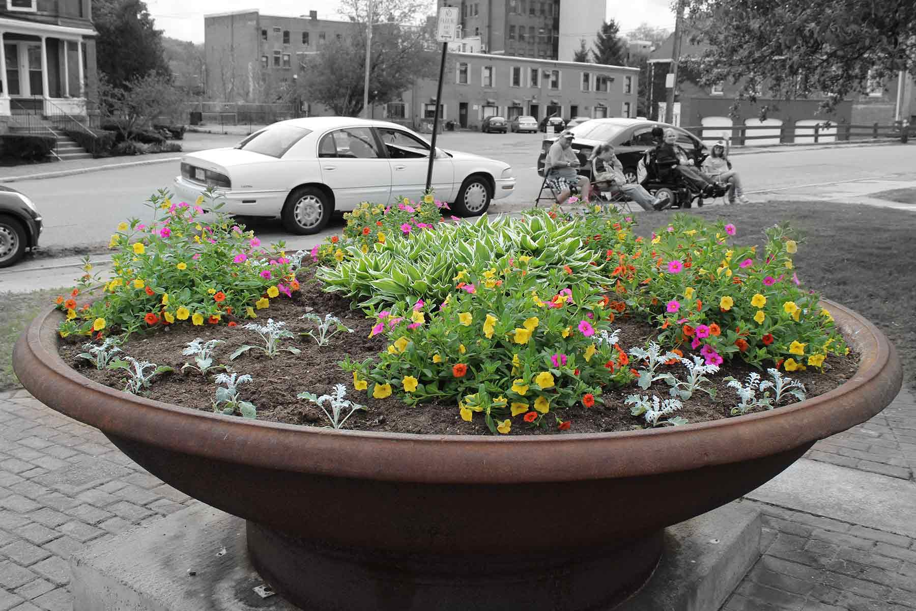colorsplashflowers.jpg