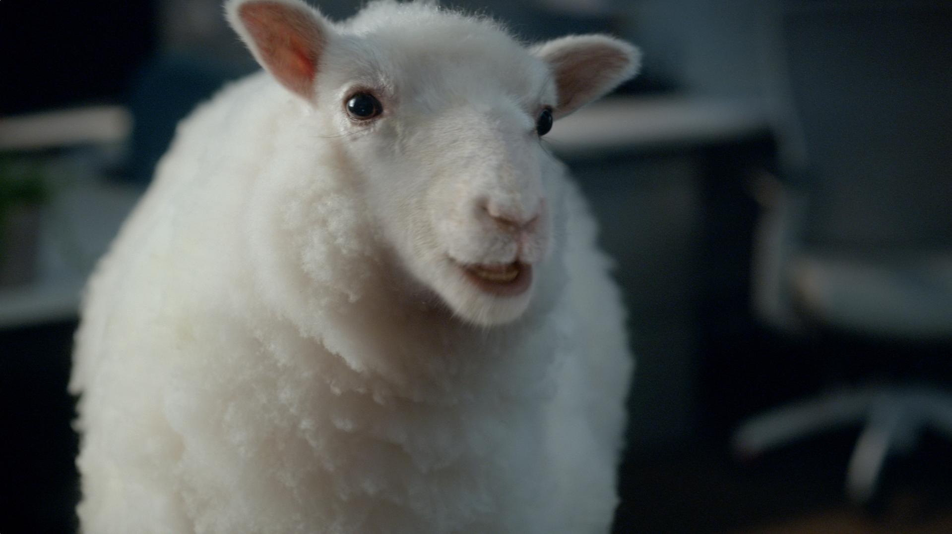 Ameritrade Lamb