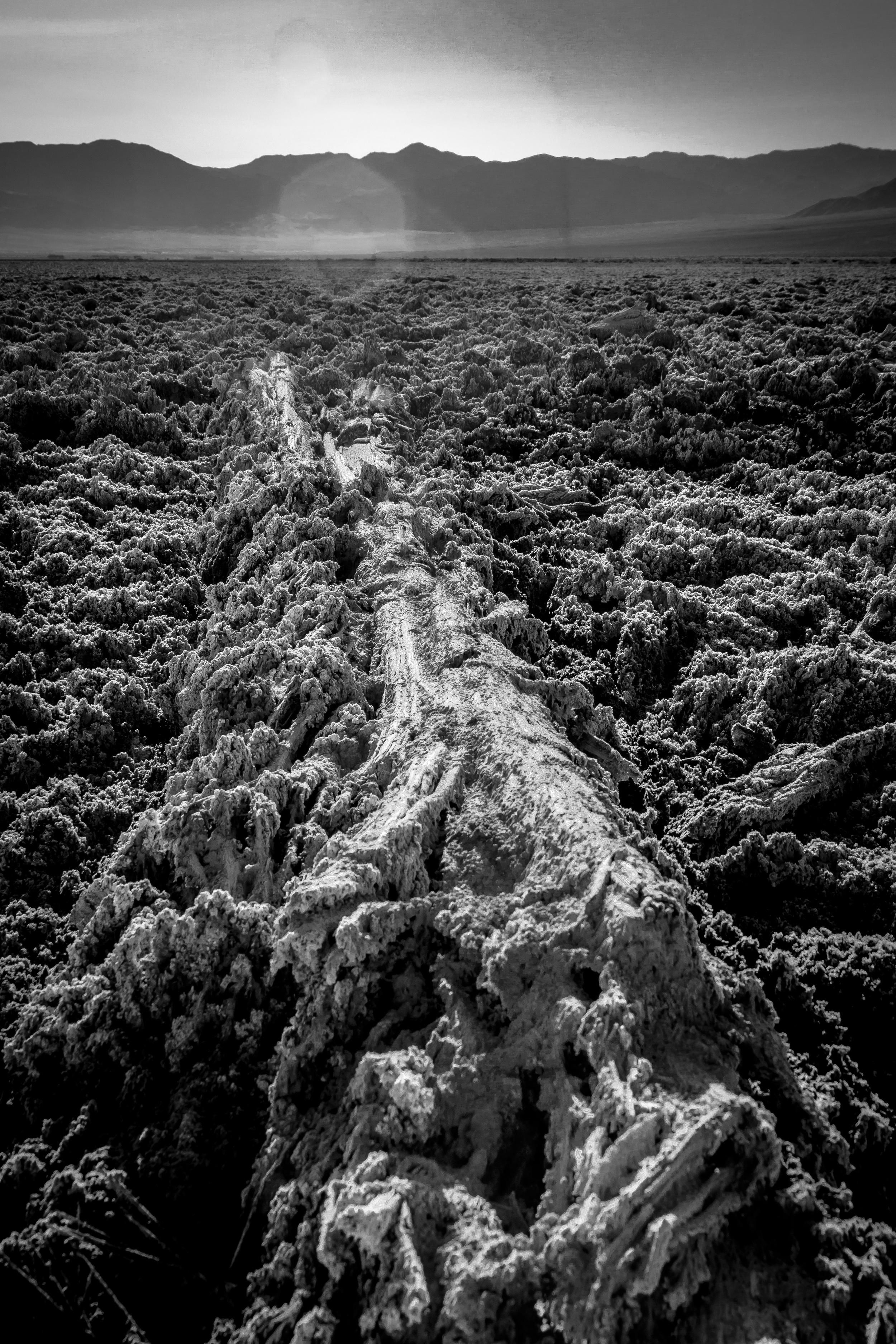 Salt-Encased Tree