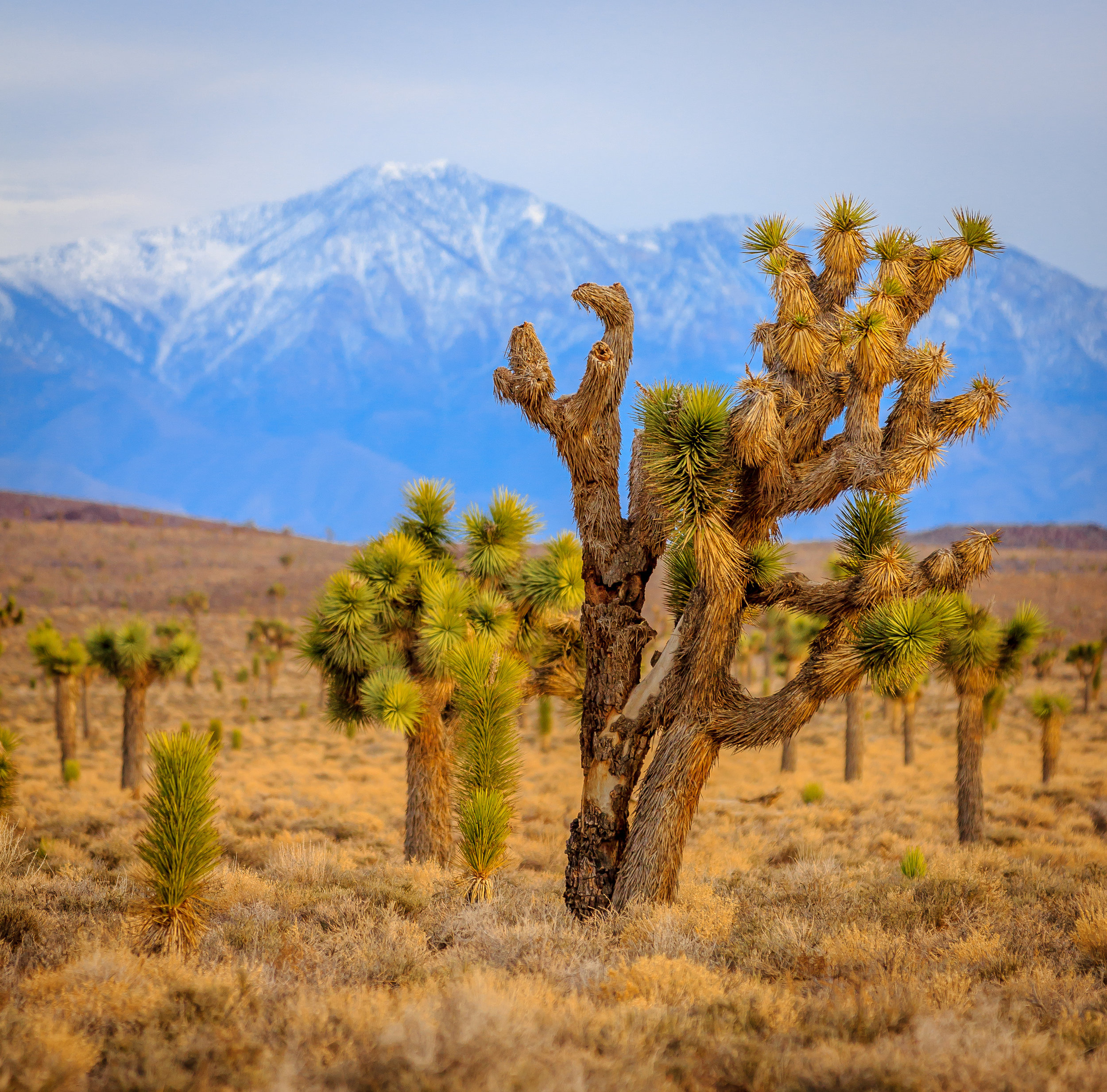 An Evening With The Joshua Trees