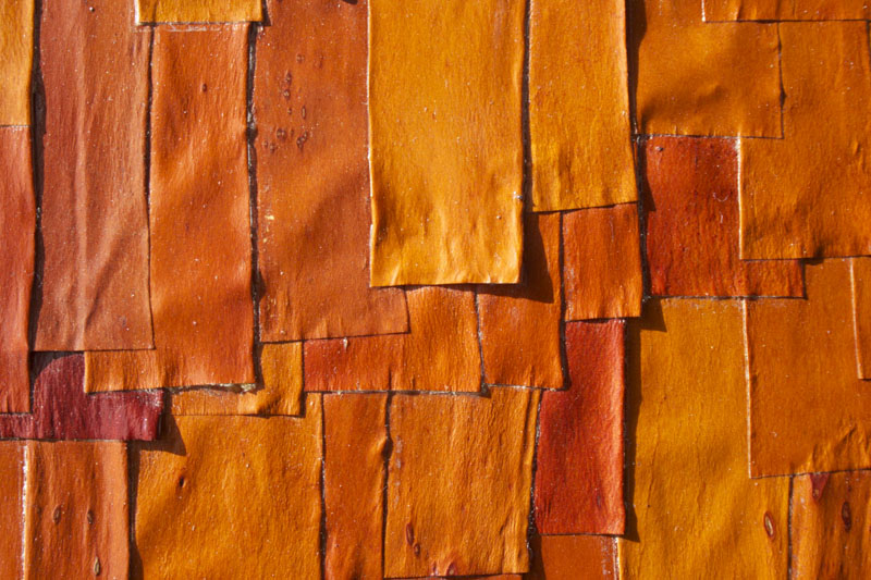 A close-up of the layered madrone bark.
