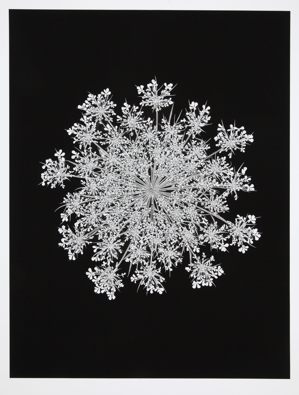 Barbara Goodbody,  Shared Memories  portfolio, 2012, 1/5, Ink jet print, 19.5 x 14 inches