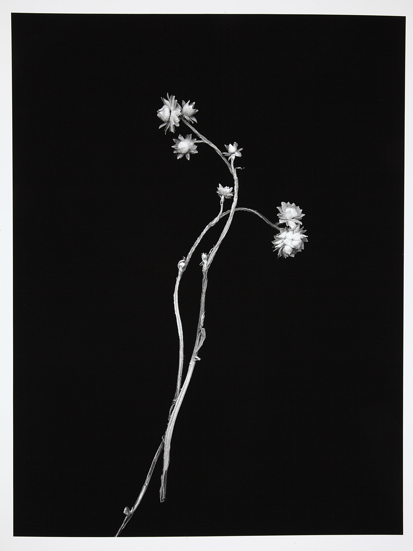 Barbara Goodbody,  Shared Memories  portfolio, 2012, 2/5, Ink jet print, 19.5 x 14 inches